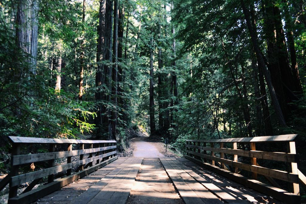 Walk over bridge in forest on a sunny day to restore energy